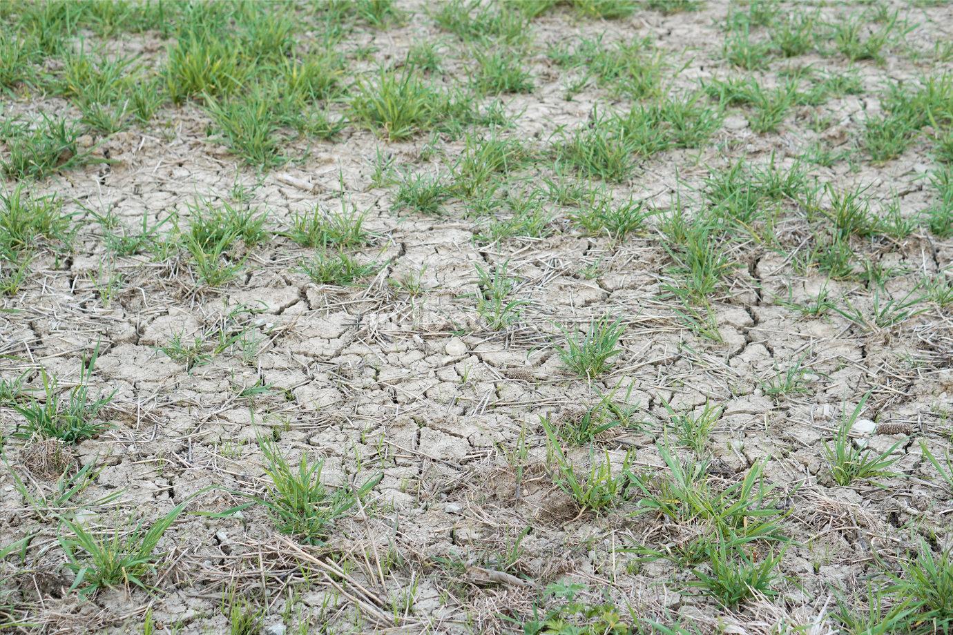 dry farmland because of no rain