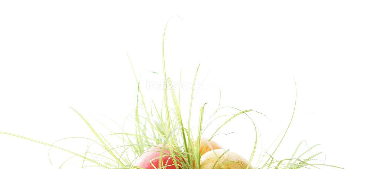Easter eggs hidden in the tall grass