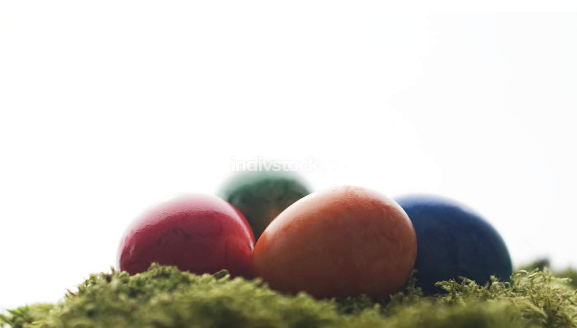 easter eggs with green moss
