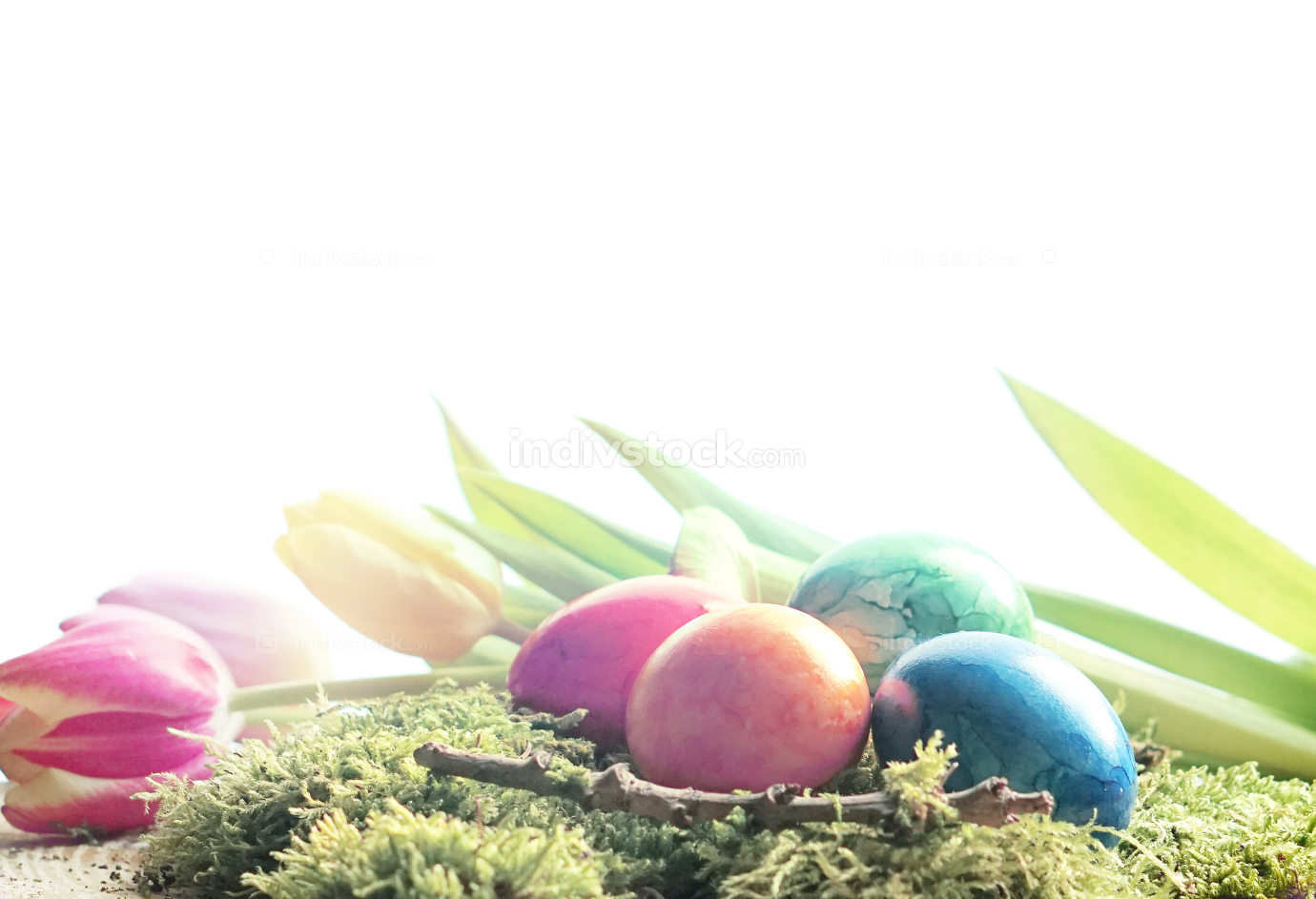 Easter with green moos and colorful easter eggs and tulips