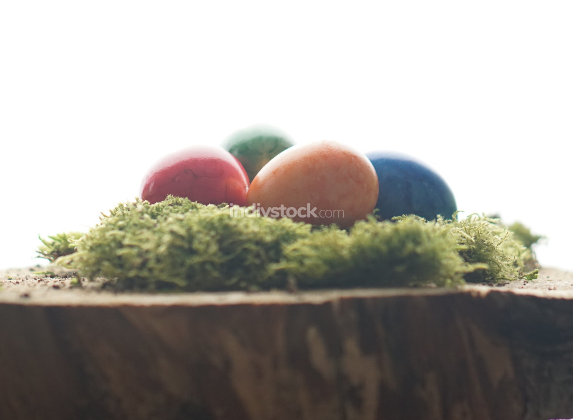 Easter wooden block with green moos and colorful easter eggs