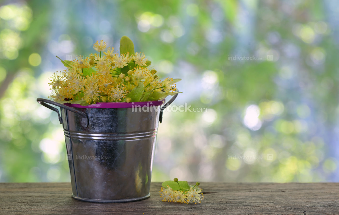 Flowers of linden tree in bucket