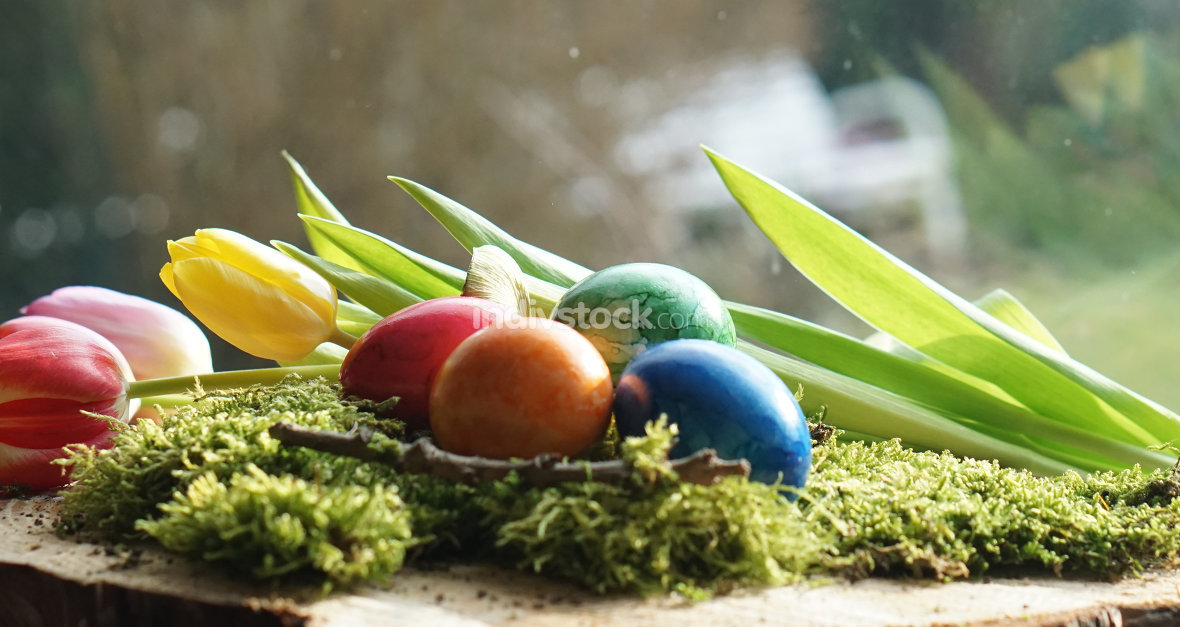 four Easter eggs at green moos with tulips front of garden view