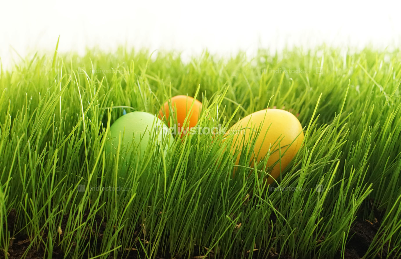 free download: easter eggs in green grass outdoor in garden