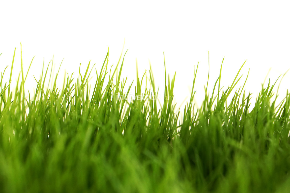free download: green grass meadow lawn blade of grass