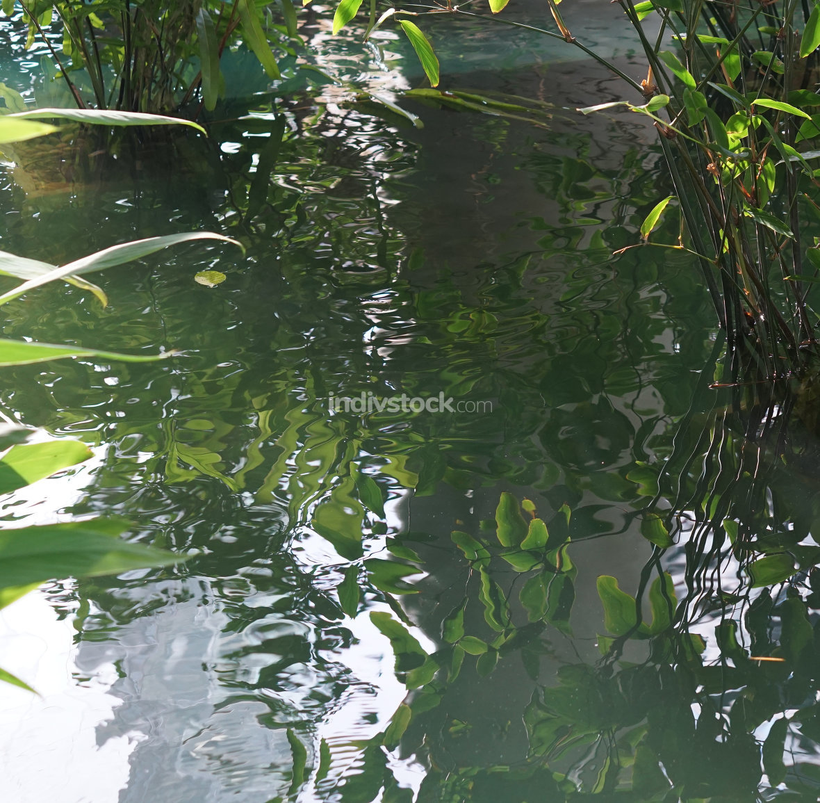 free download: water pond water reflection of green