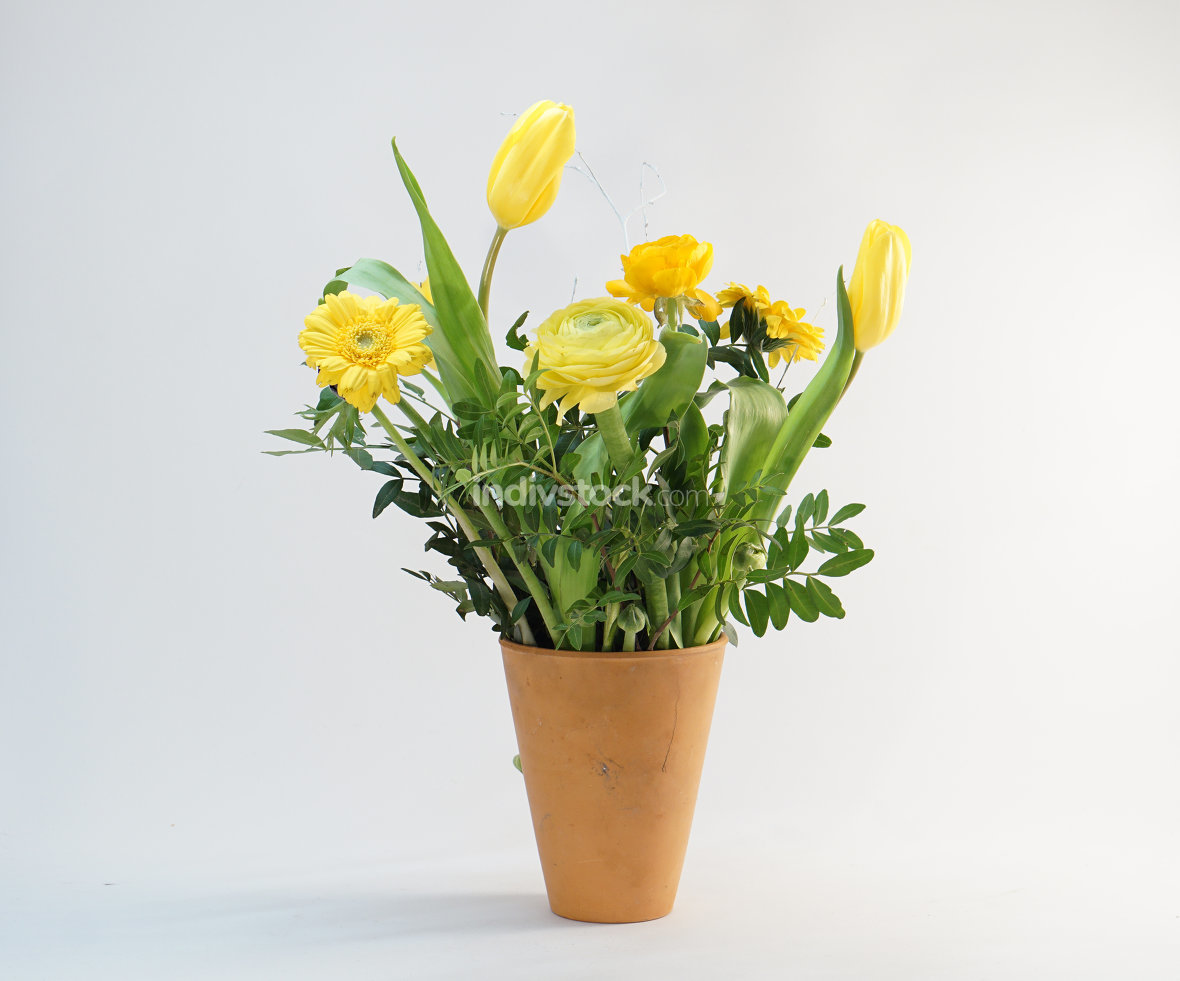 free download: yellow spring flowers