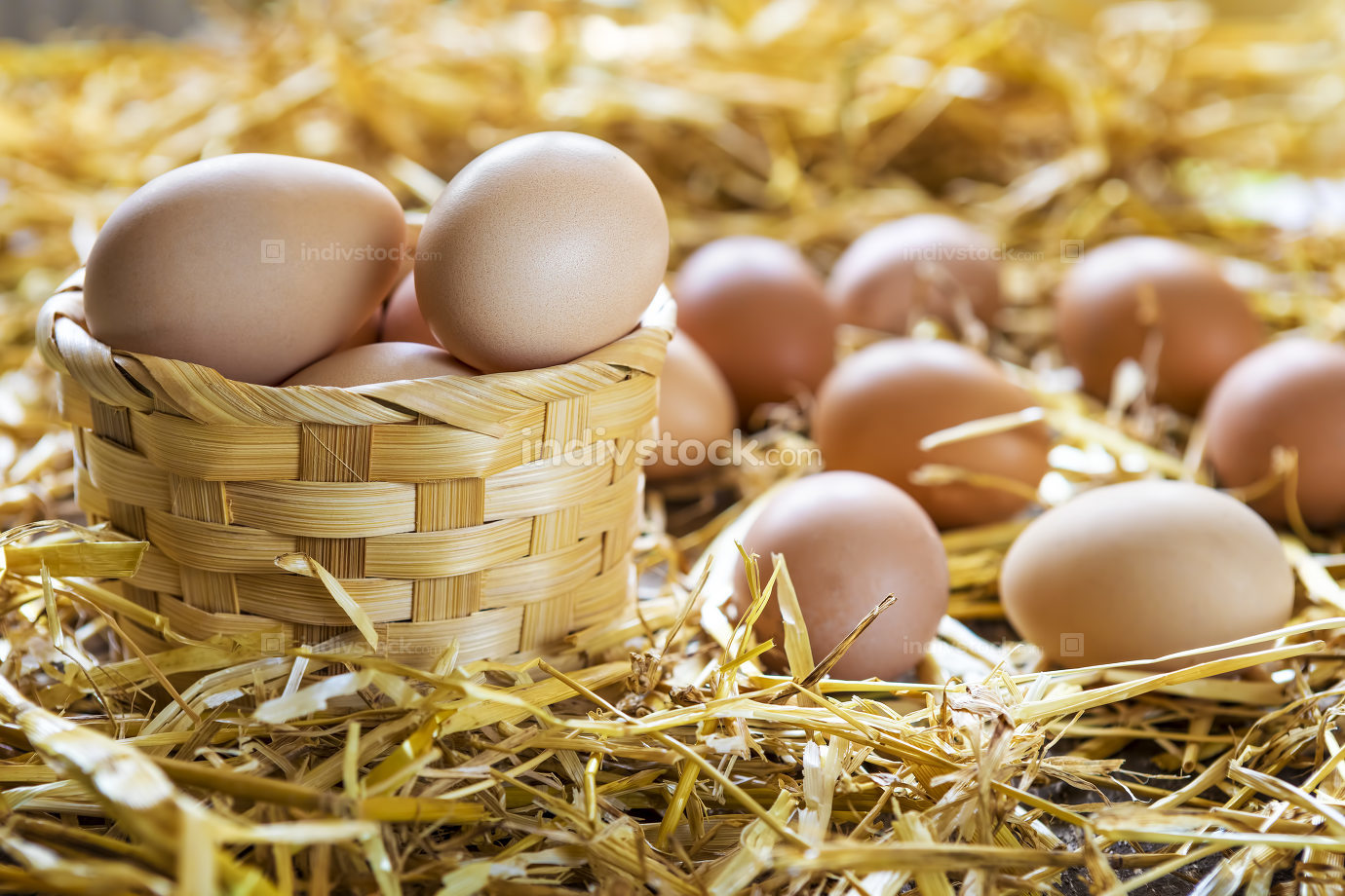 Fresh eggs in nest on straw at farm