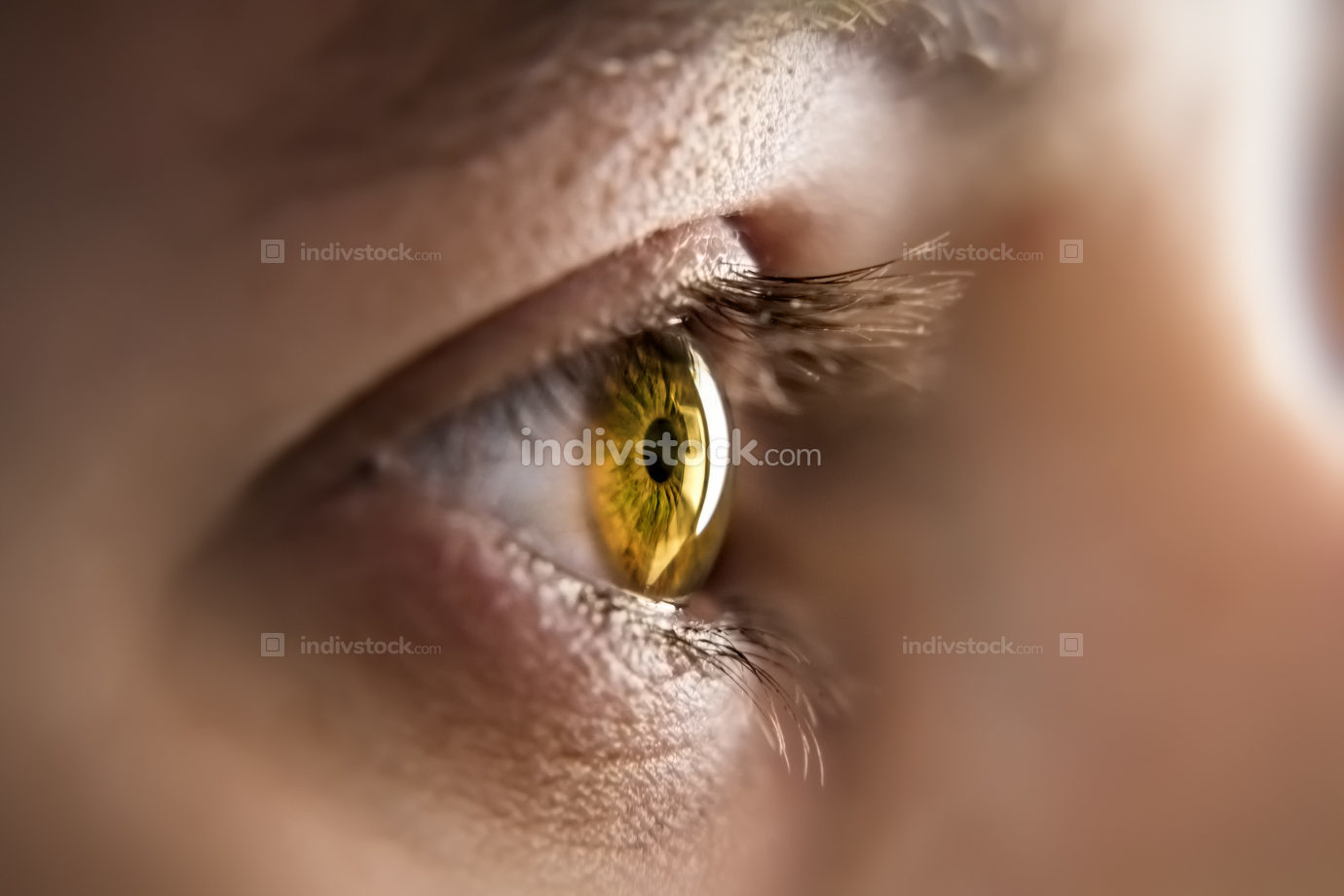 honey colored eye iris