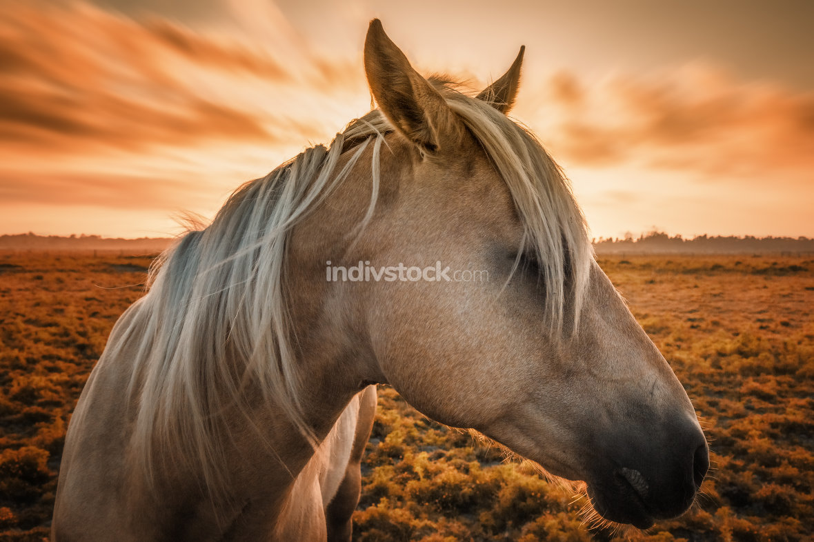 Horse Portrait at Sunset in Northern California.