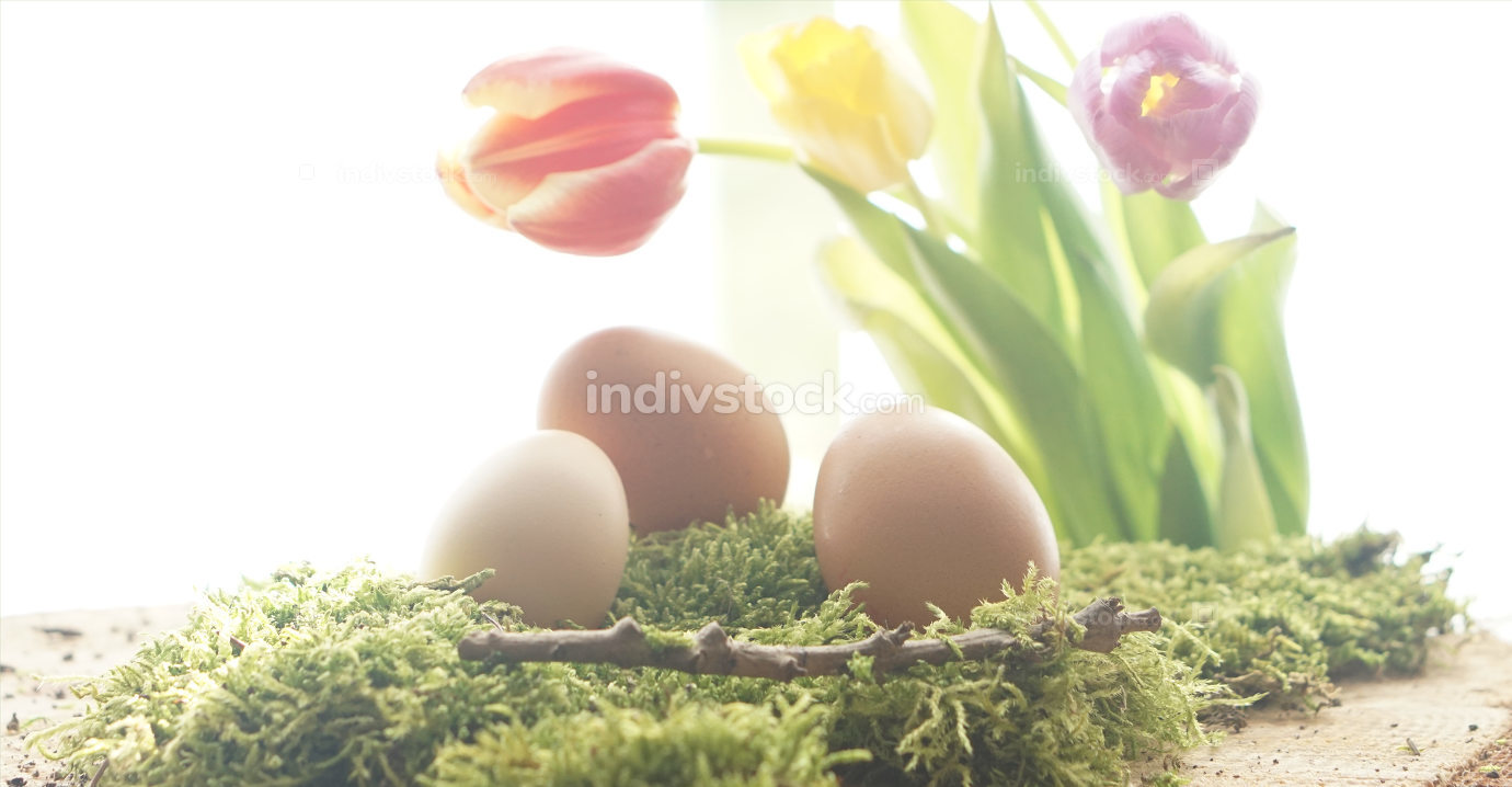 light brown real natural easter eggs at green moos with bunch of