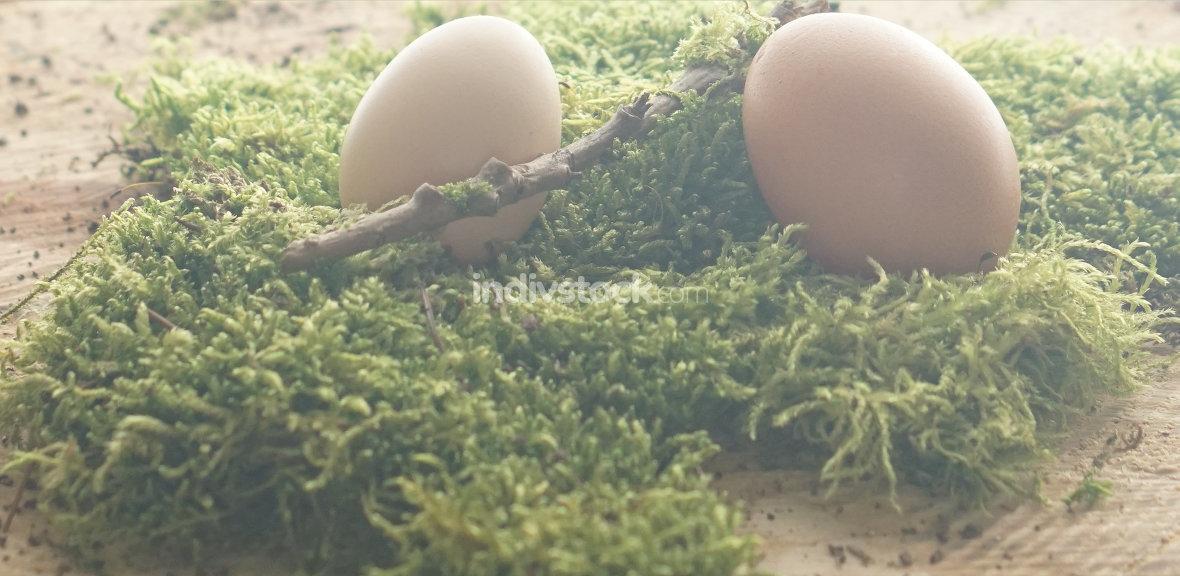 natural biological brown eggs at green moss
