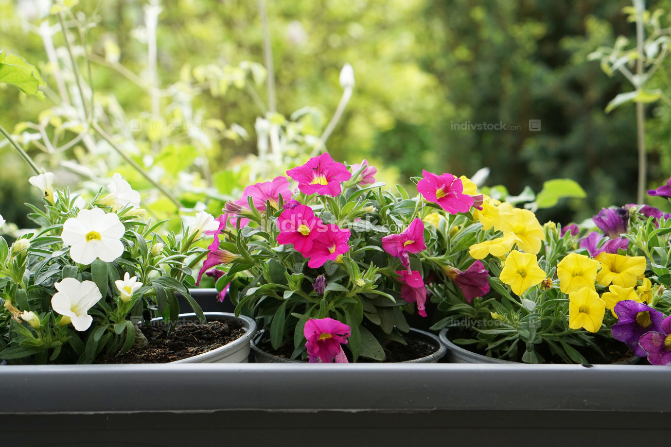 outdoor garden flower pot view