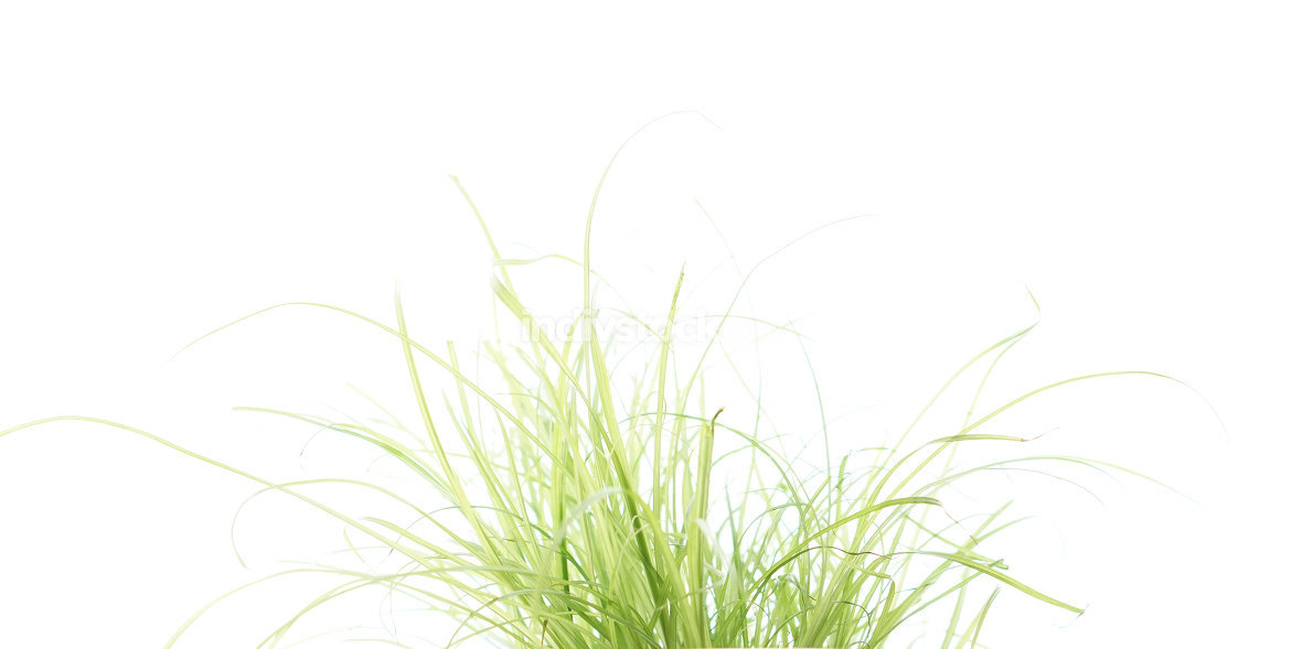 tall green leaves of grass