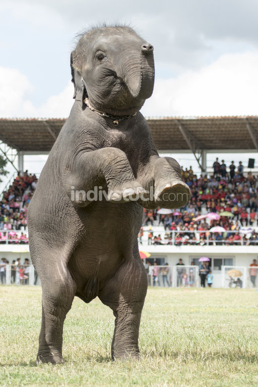 THAILAND ISAN SURIN ELEPHANT FESTIVAL ROUND UP