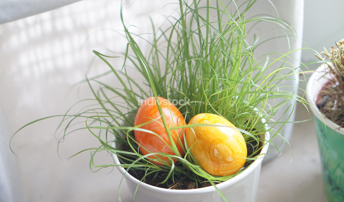 two easter eggs hidden in the grass in the flower pot at indoor