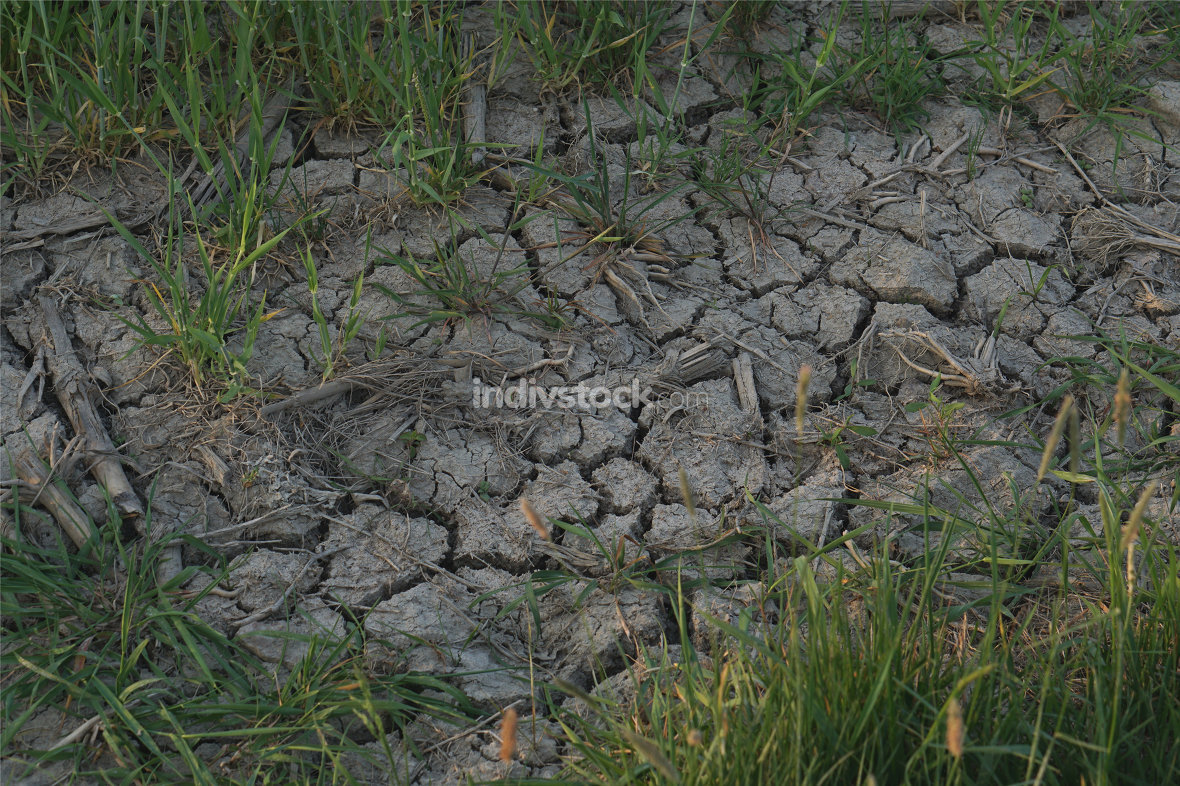 withered dry land ground