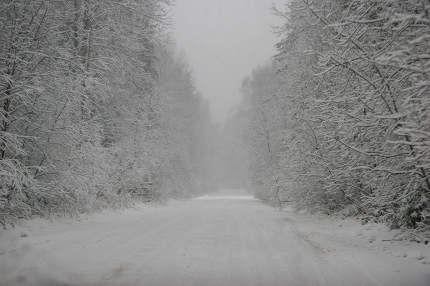 Beautiful winter landscape with snowy road in the winter forest.