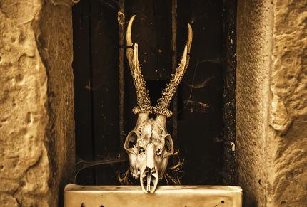 Goat skulls for terrifying decoration
