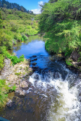 small river with green plants New Zealand