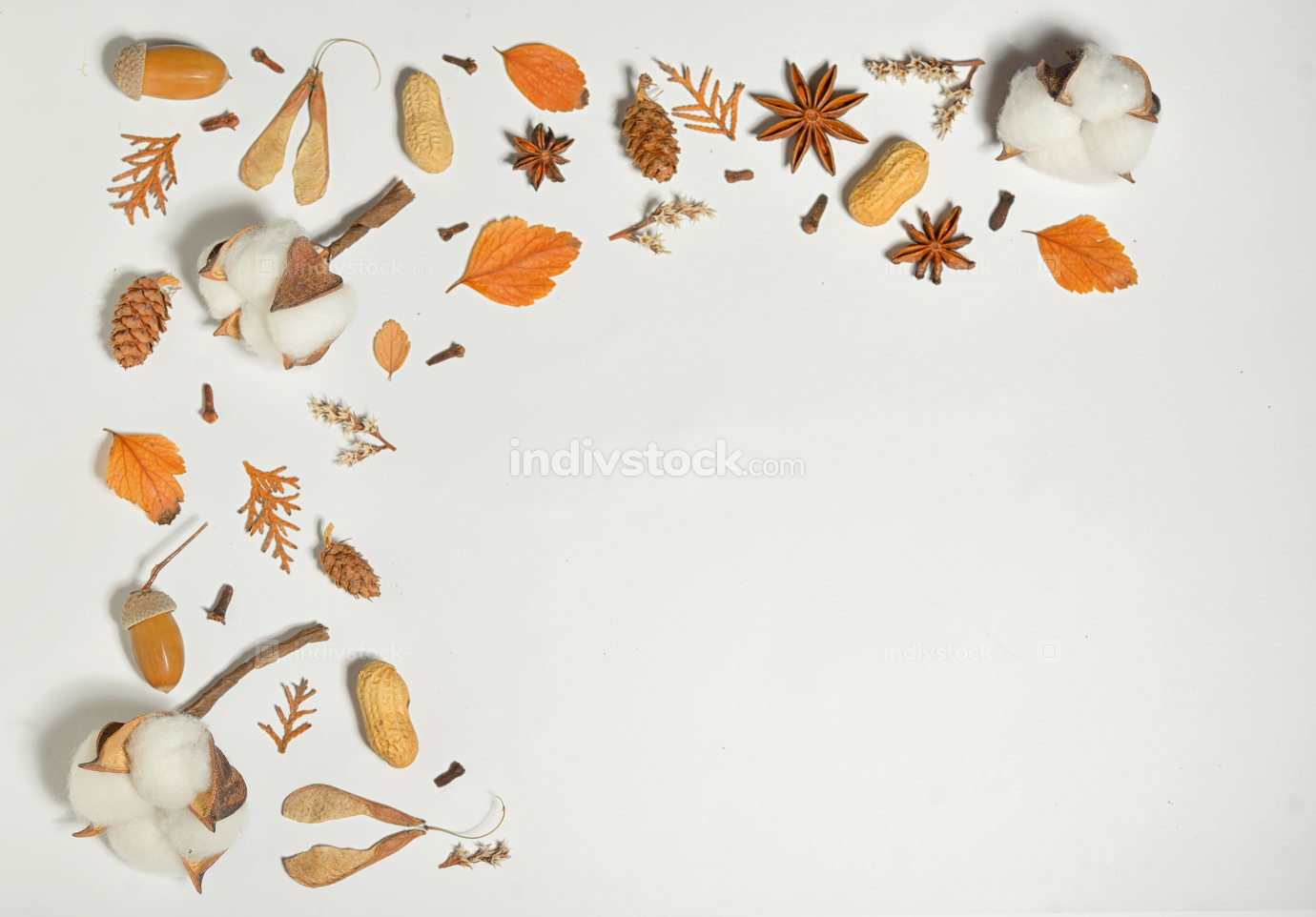 Autumn frame with cotton buds