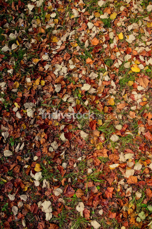 Brown leaf texture and background. Dry leaves background texture
