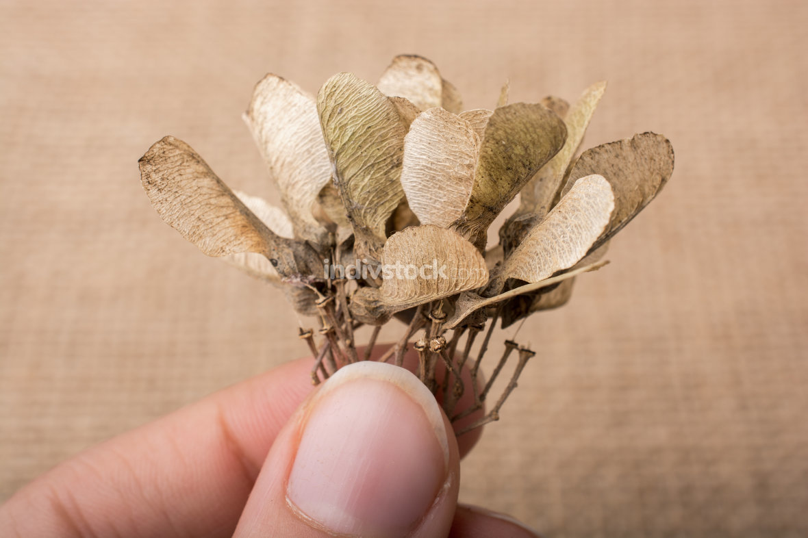dry leaf  on brown canvas background