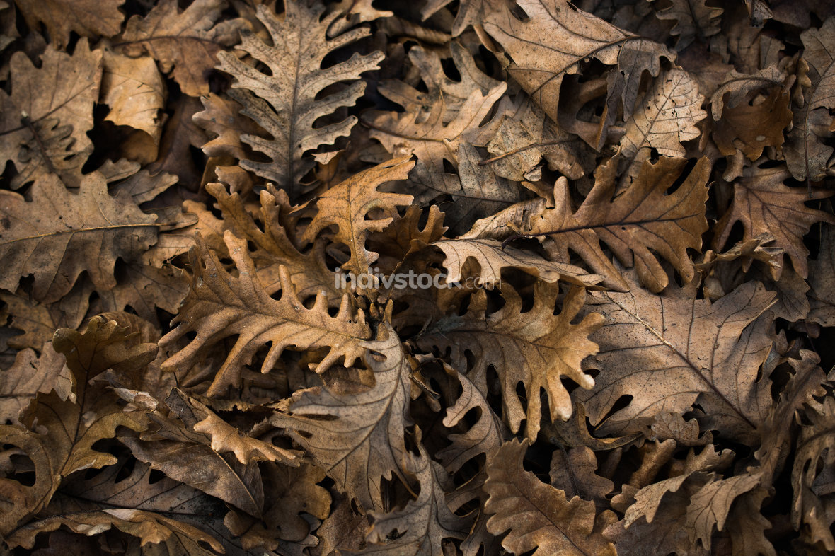 Dry leaves as an autumn background