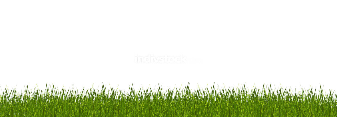 free download: green grass 3d-illustration isolated white background