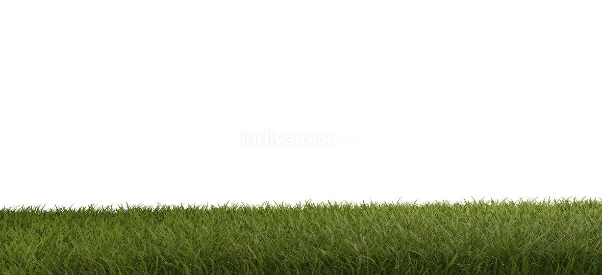green grass field 3d-illustration