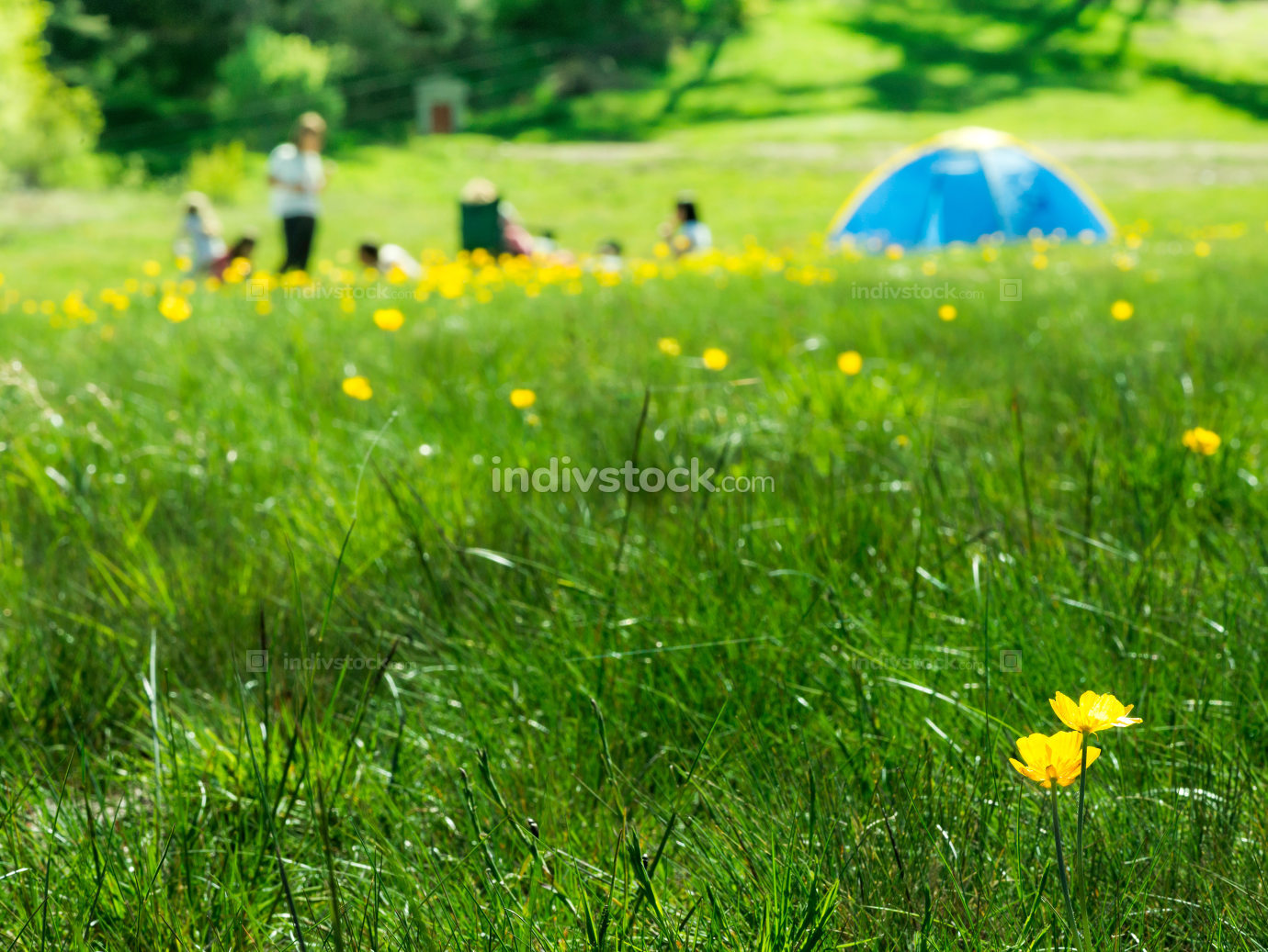 Green meadow in a forest and tent