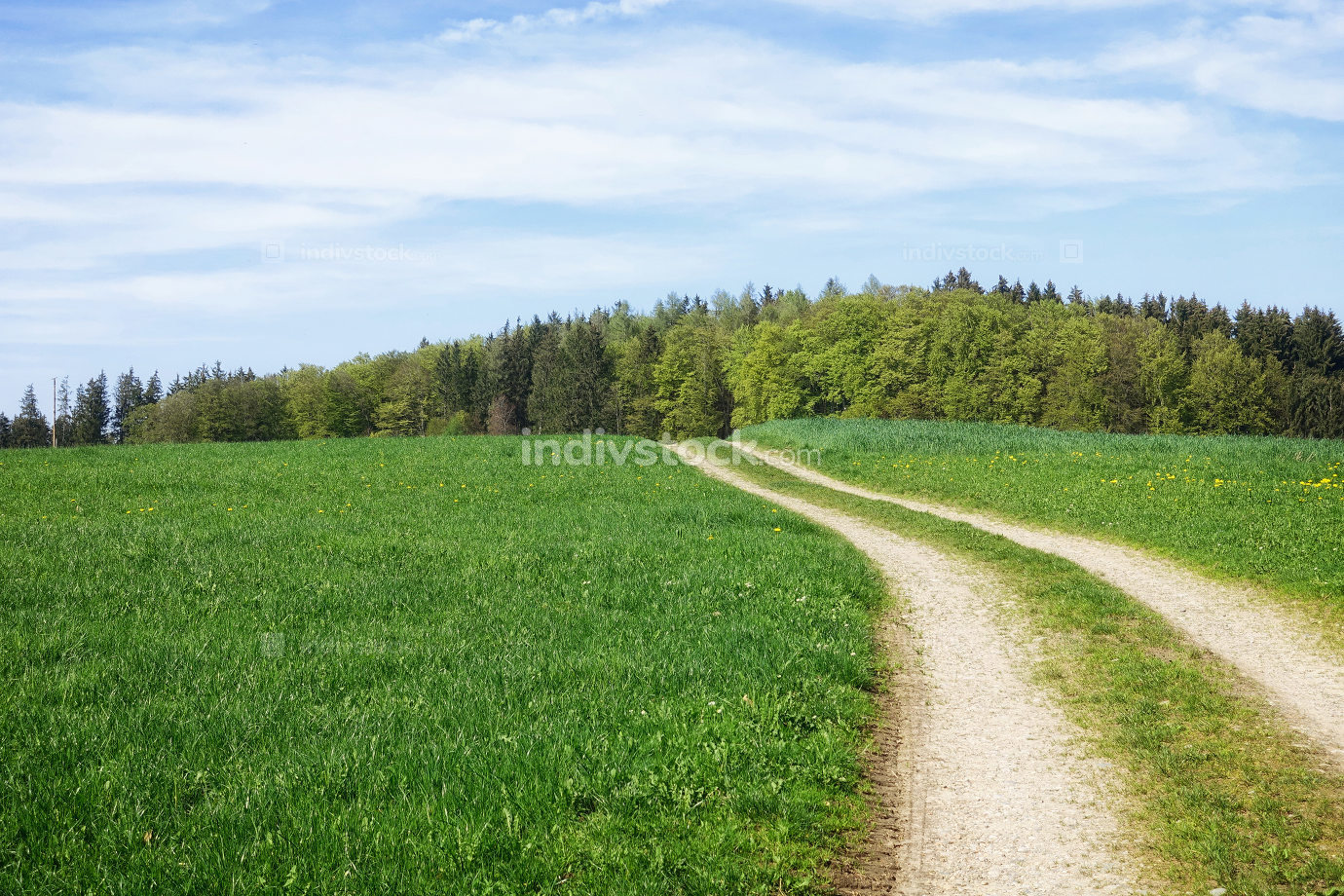 path in a green meadow nature scenery landscape