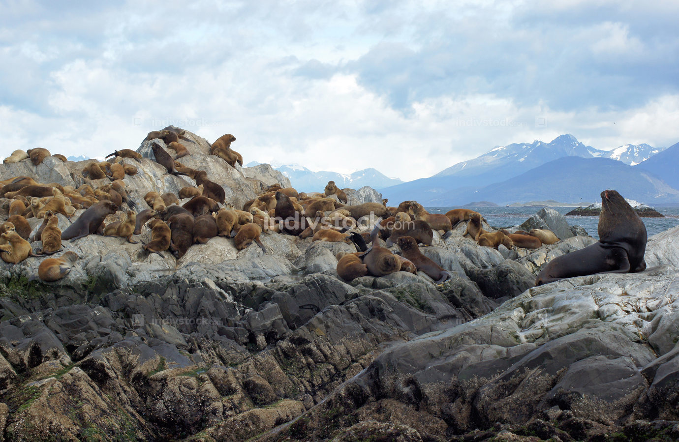 Seals, Beagle Channel, Argentina