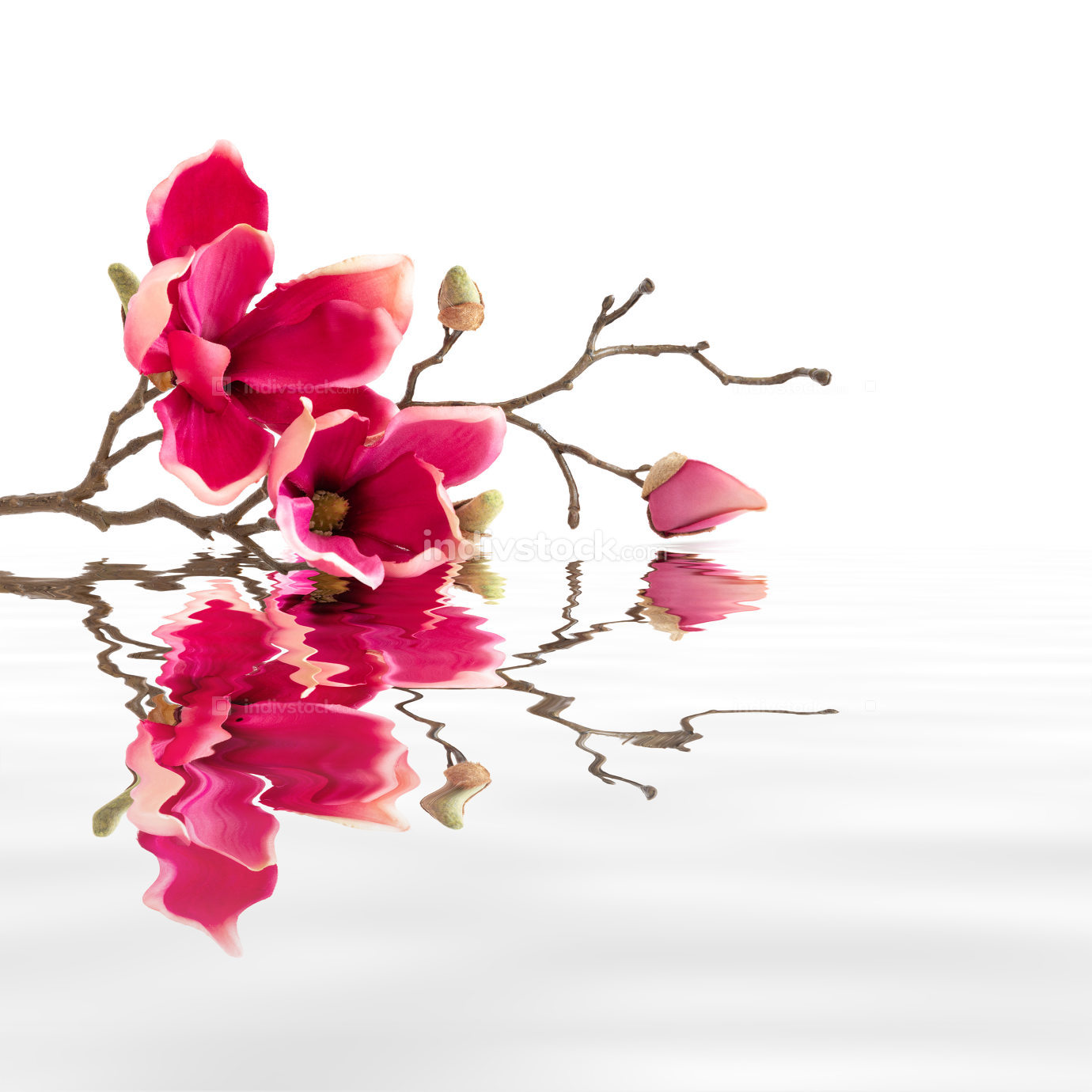 some red magnolia flowers water reflections