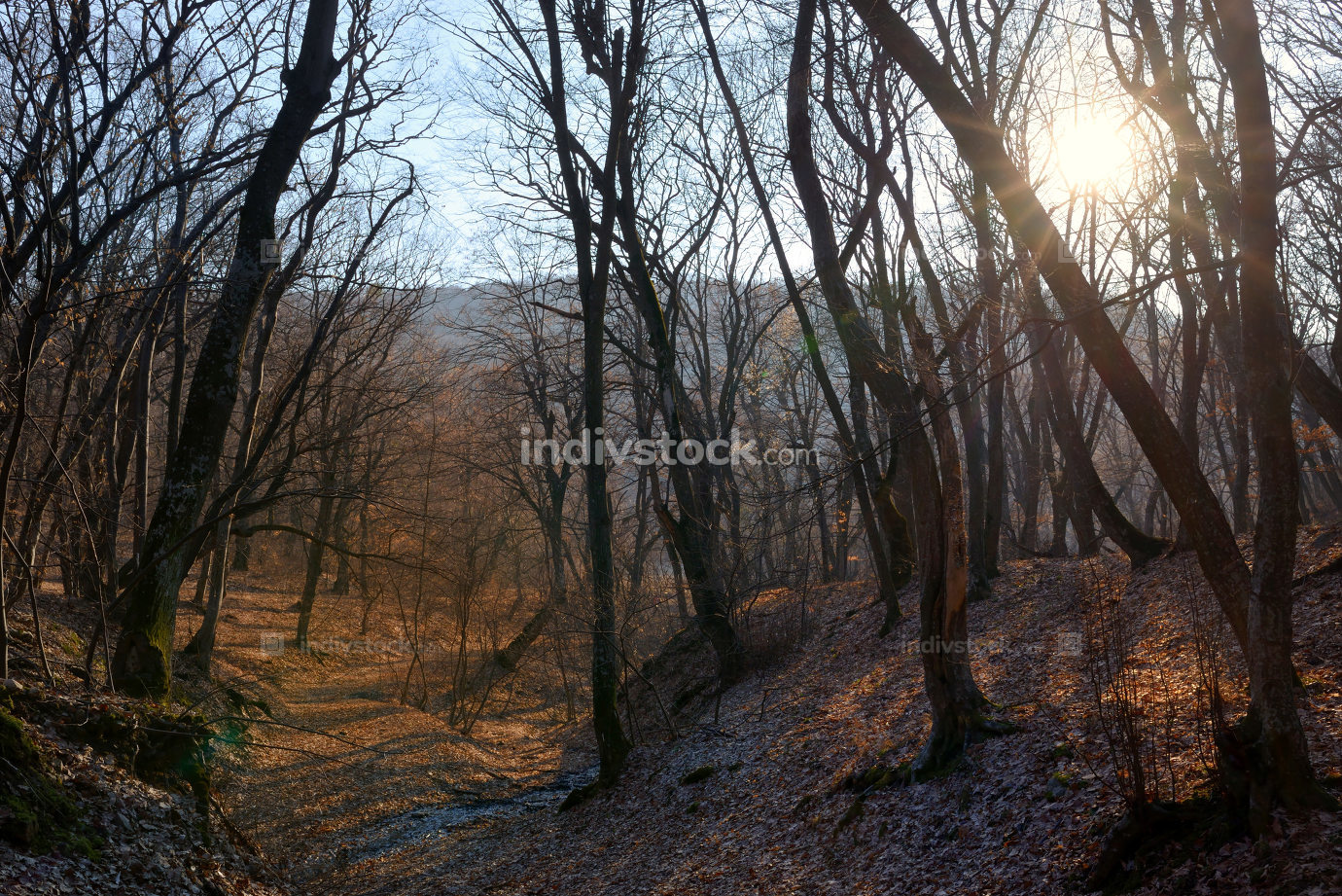 Spring forest and sun at sunset