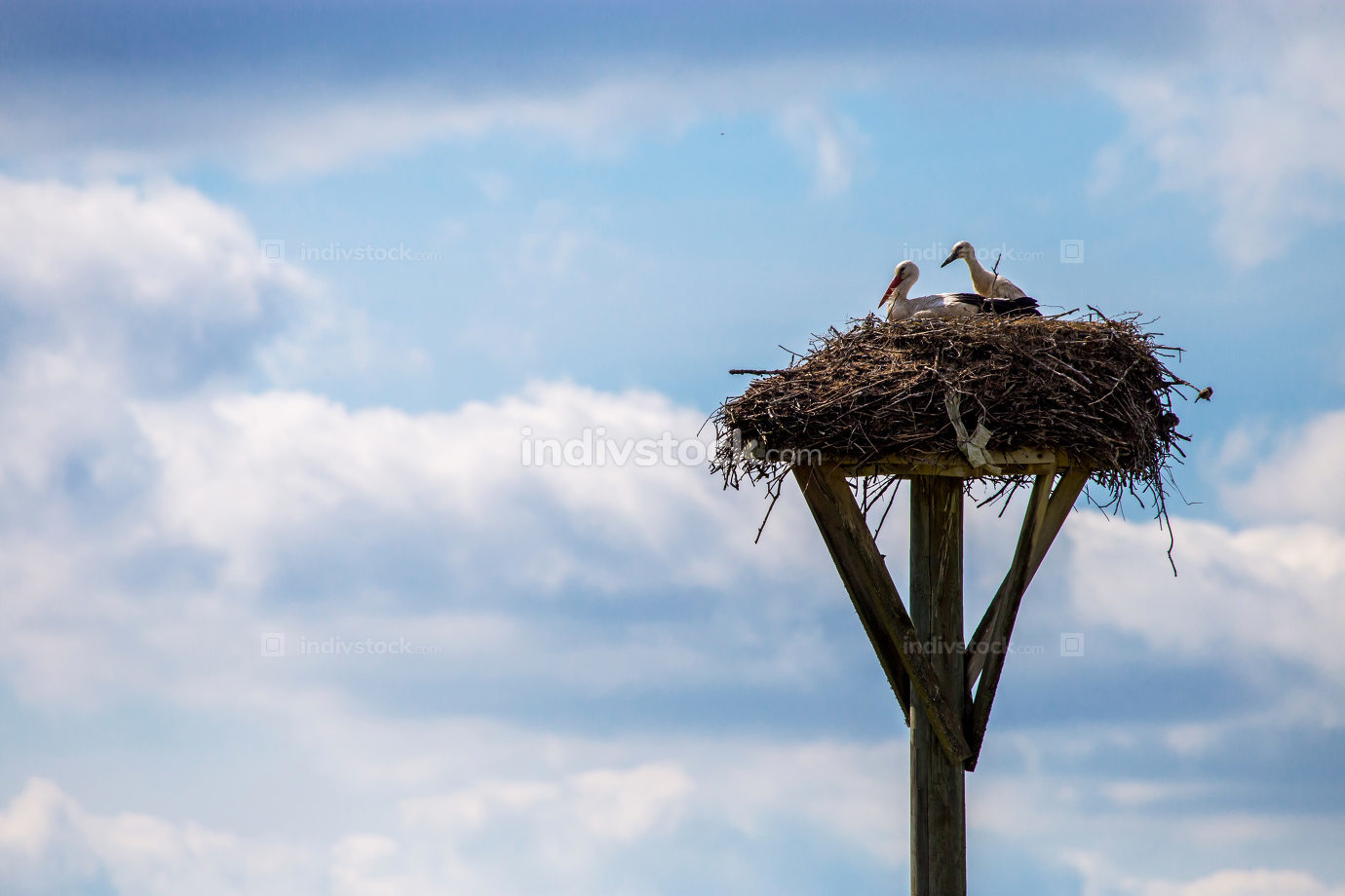 Storks baby in nest on blue sky background.