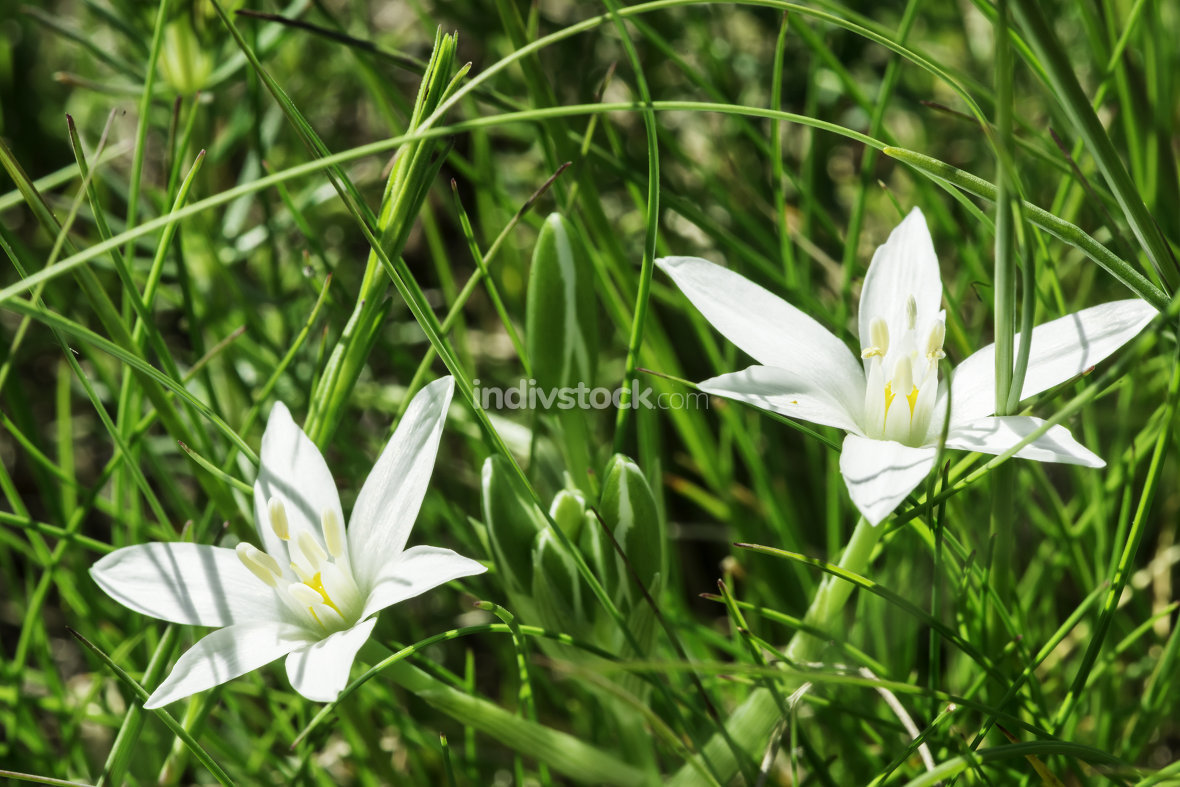White flower and green meadow