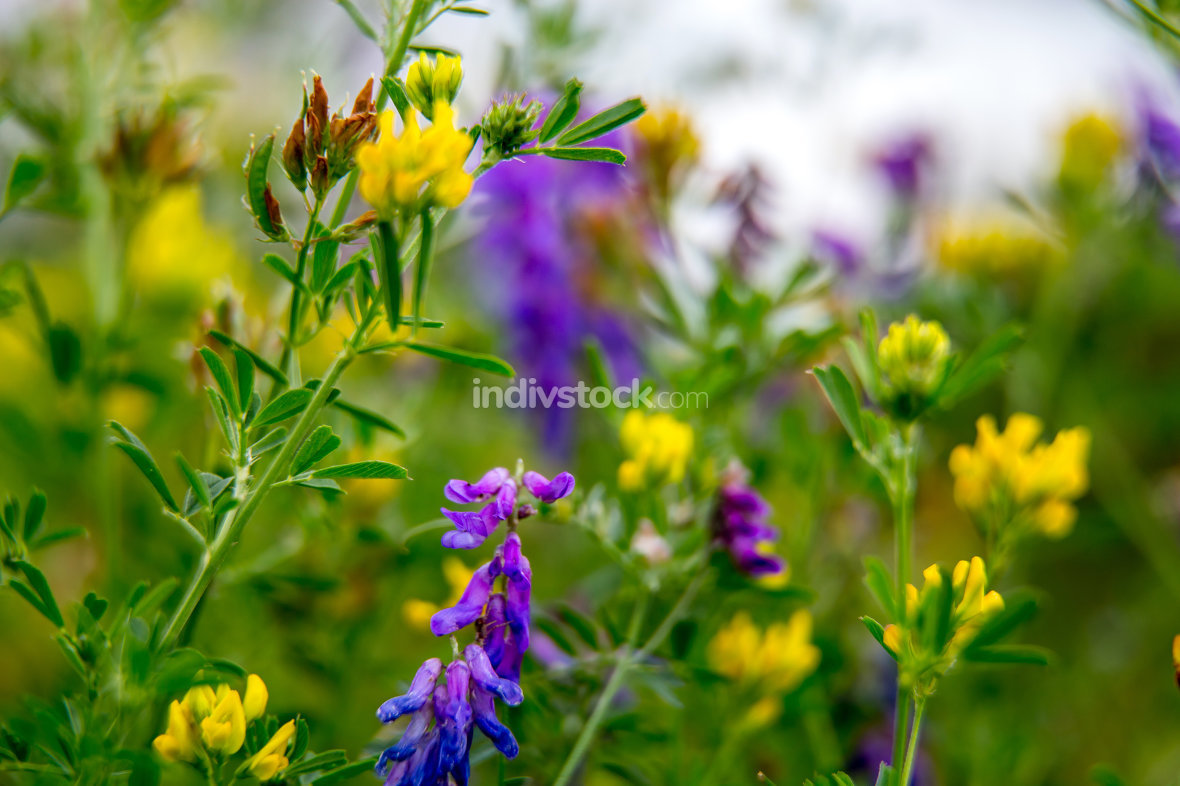 Wild colorful flowers on green grass background.