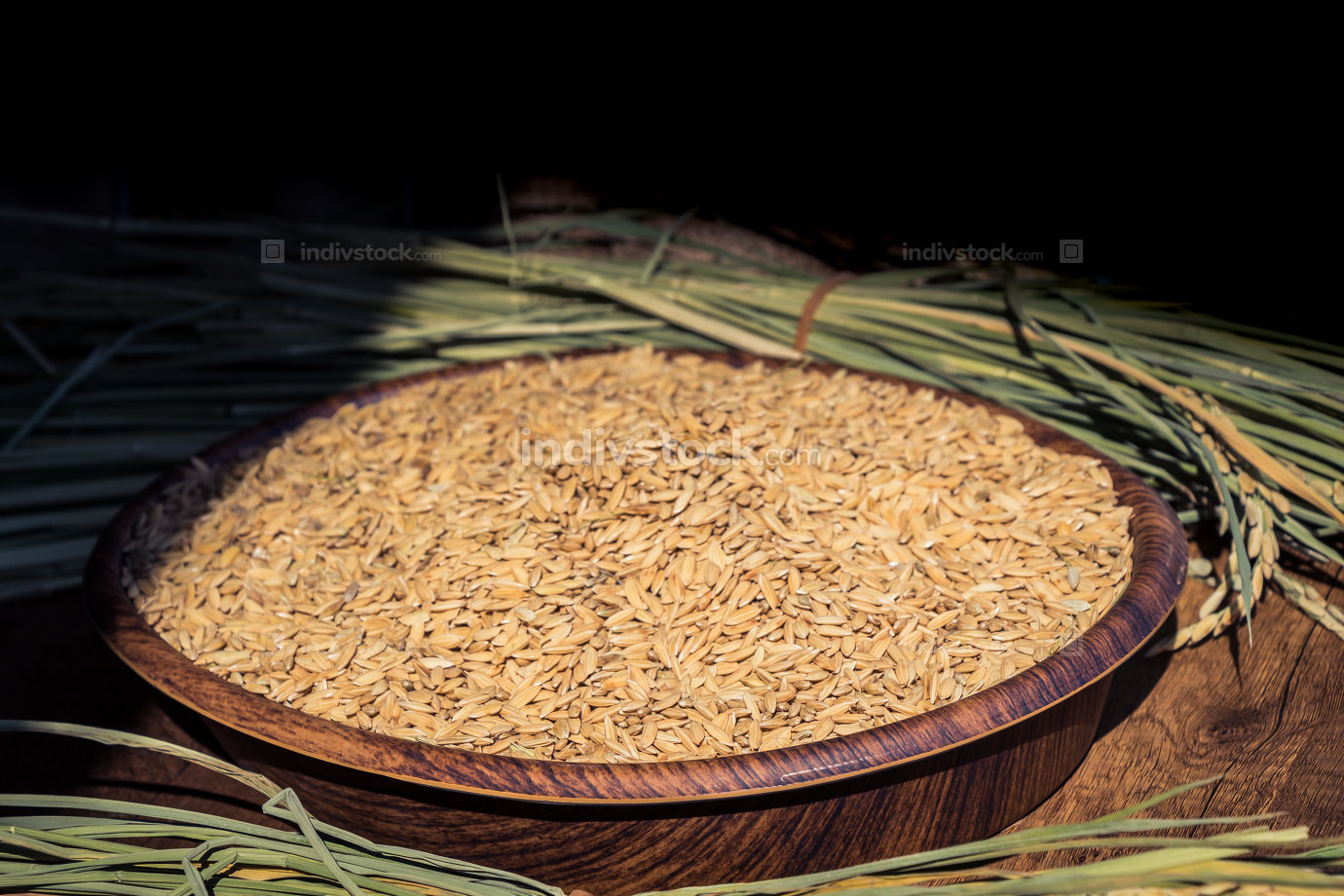 Yellow barley grains in wooden tray on display