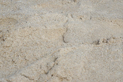 free download: sand on the beach in thailand Phuket Patong