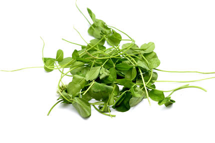 Fresh picked Clover pictured in studio,image