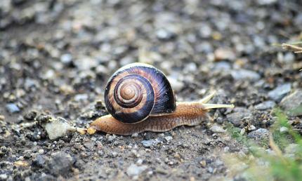 garden snail on an old apshalt road