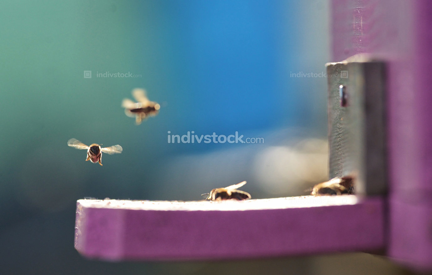 Close up of flying bees
