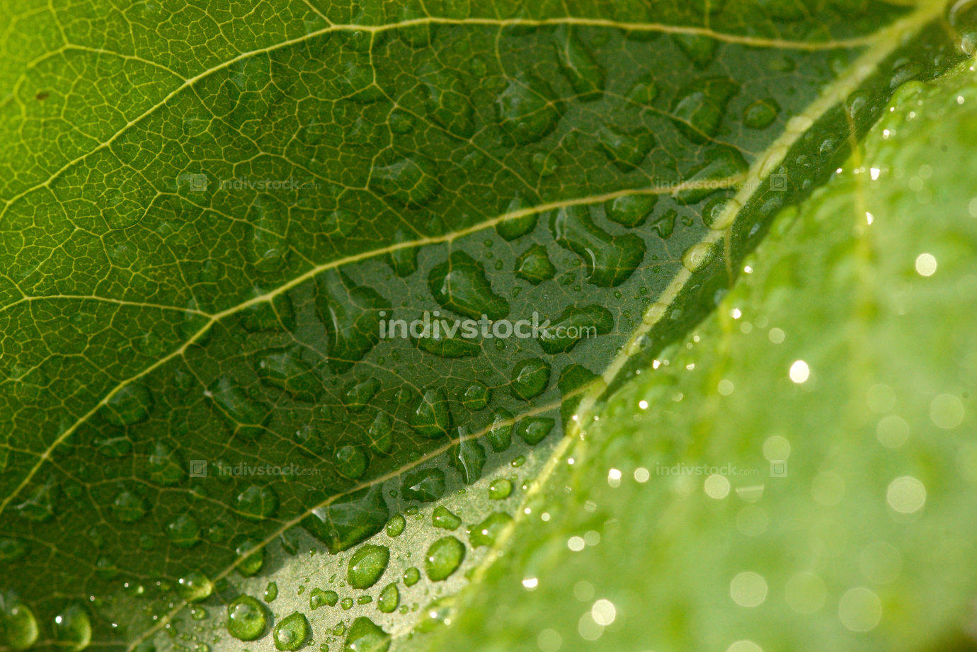Close View Water Drops Leaf