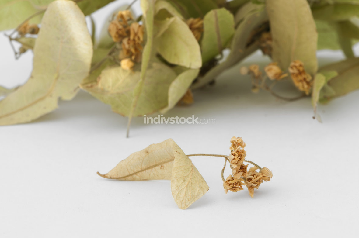 Dried lime blossom