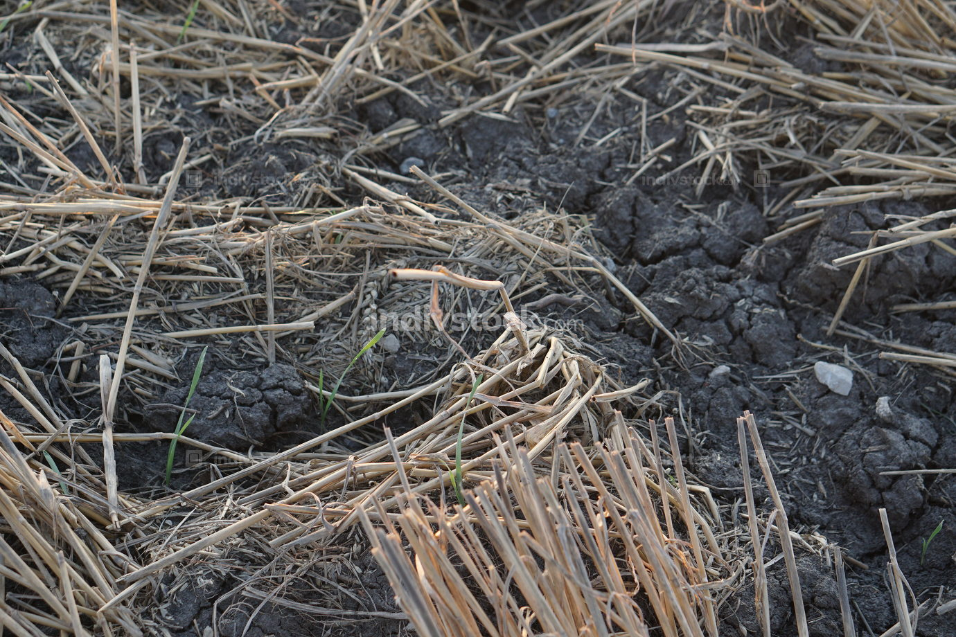 dry ground agriculture background photo