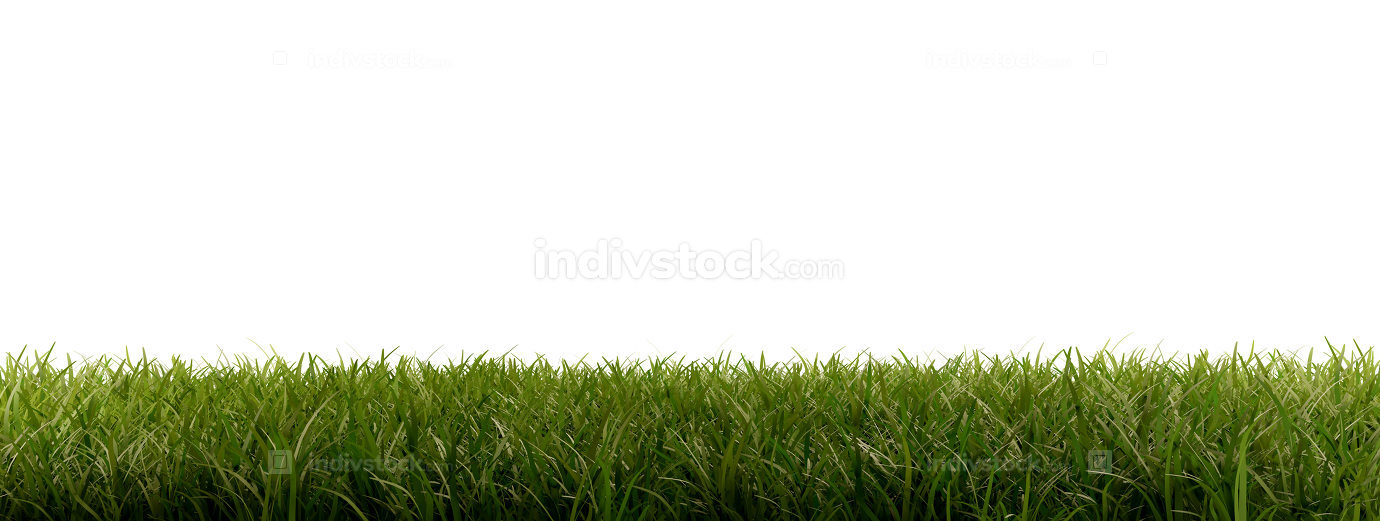 free download: green blades of grass 3d-illustration isolated on white