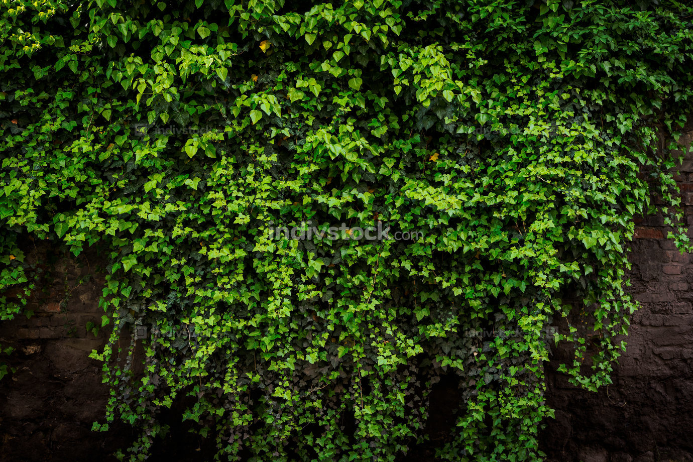 Grunge rustic brick wall with foliage