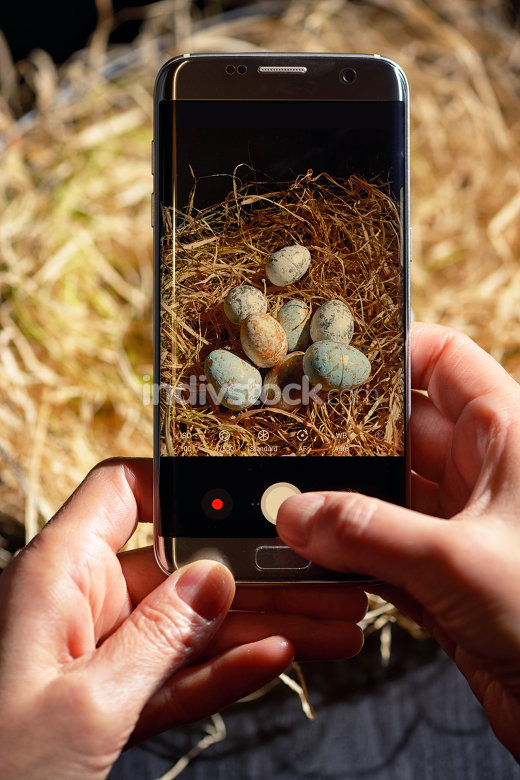 Hands holding phone and making photo of easter eggs