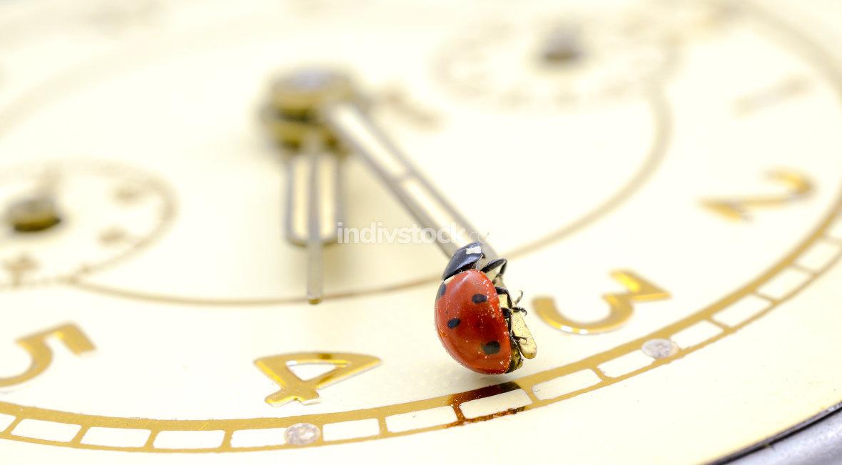 Ladybug on an old clock surface.